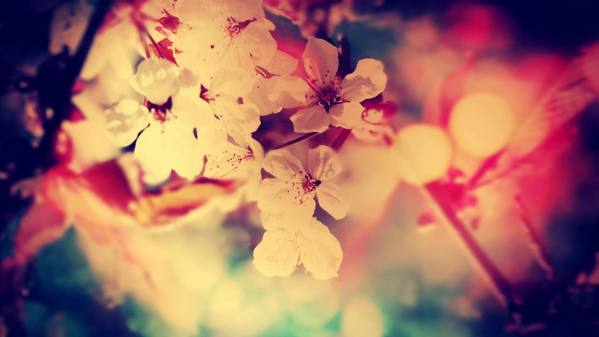 Vintage Flower Photography Backgrounds Download 20+ Free Vint...