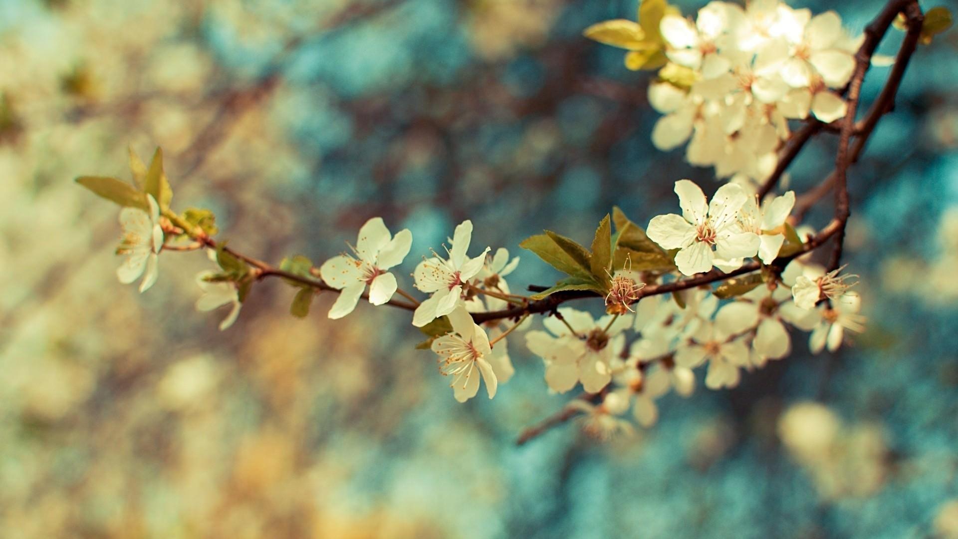 Vintage Flower Photography Wallpaper