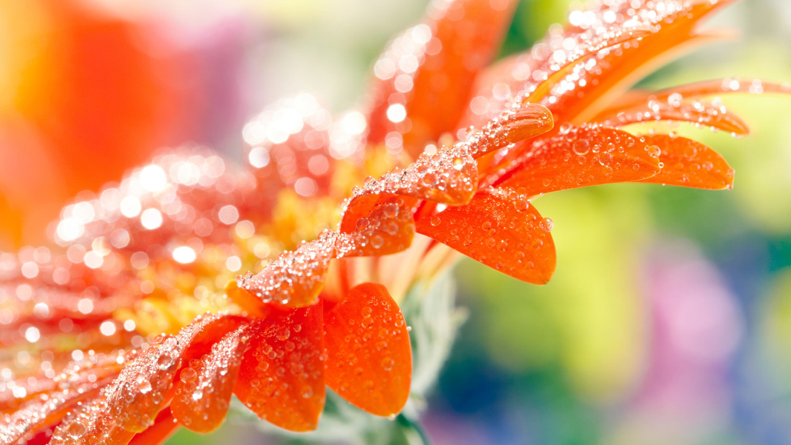 20 cool flower backgrounds wallpapers free creatives