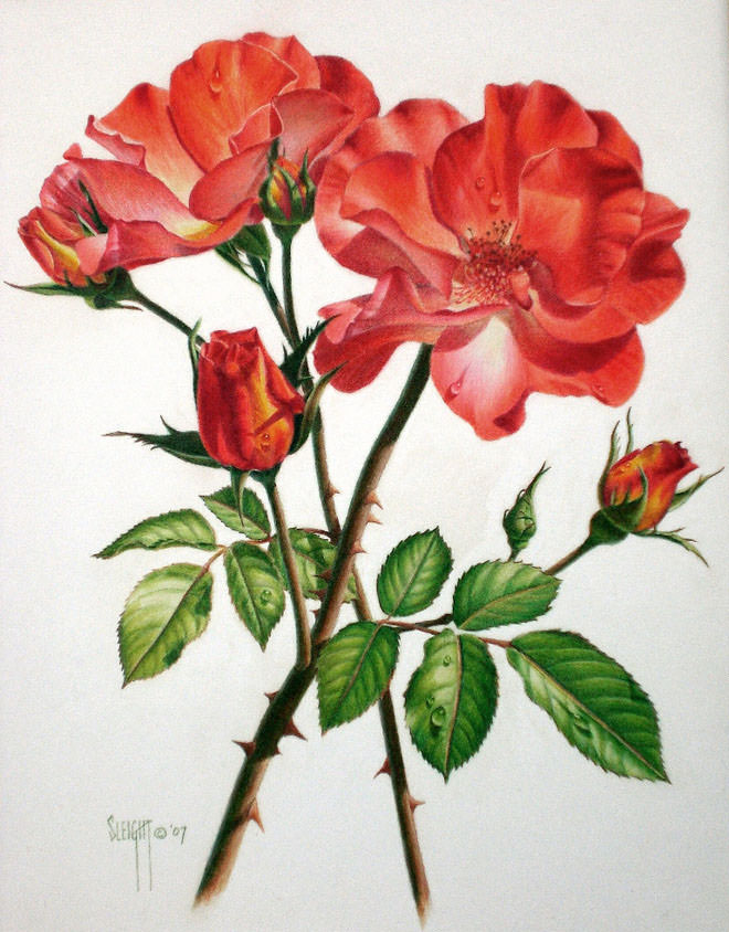 16+ Flower Drawings, Pencil Drawings, Sketches | FreeCreatives