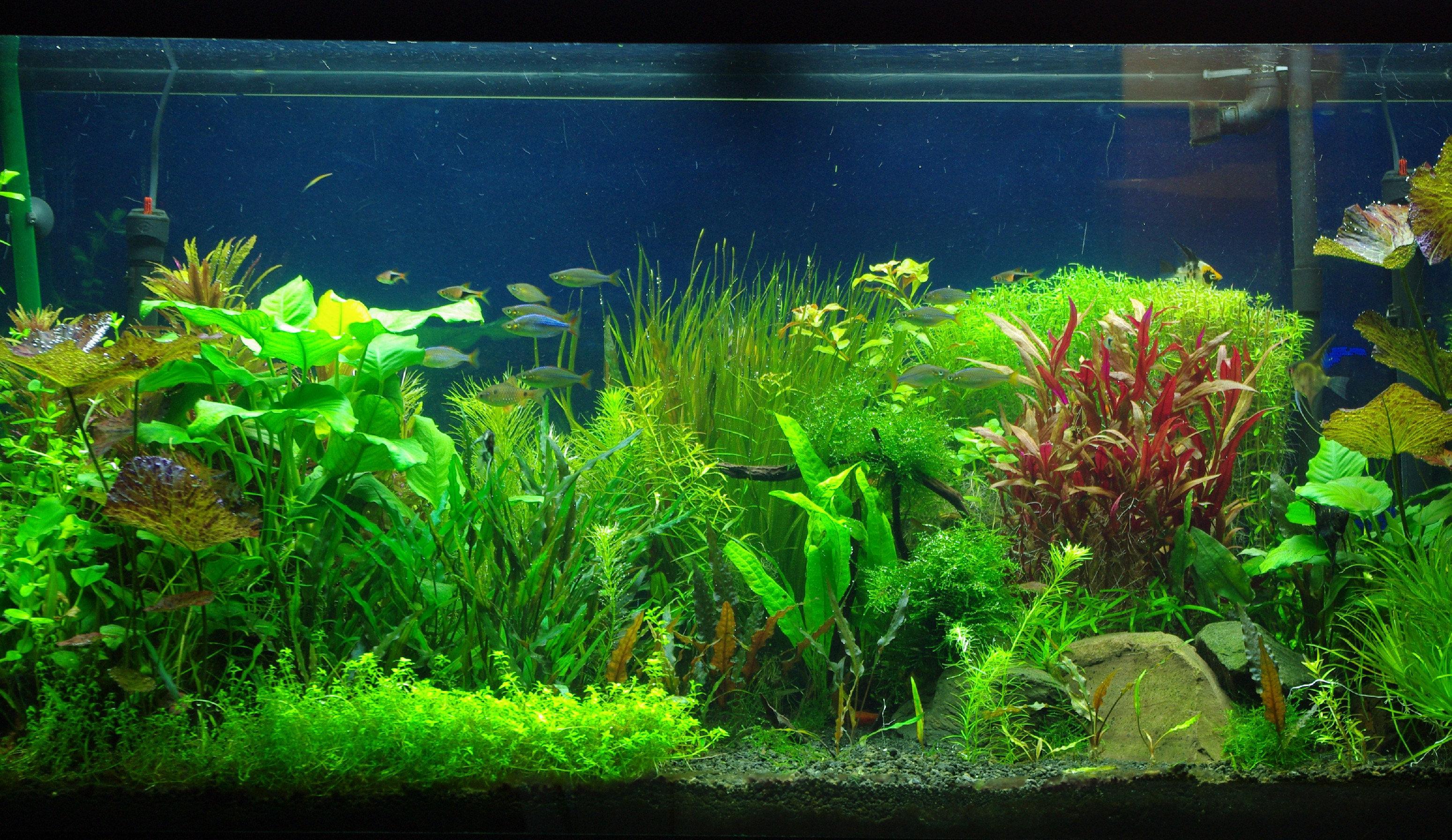25  aquarium backgrounds