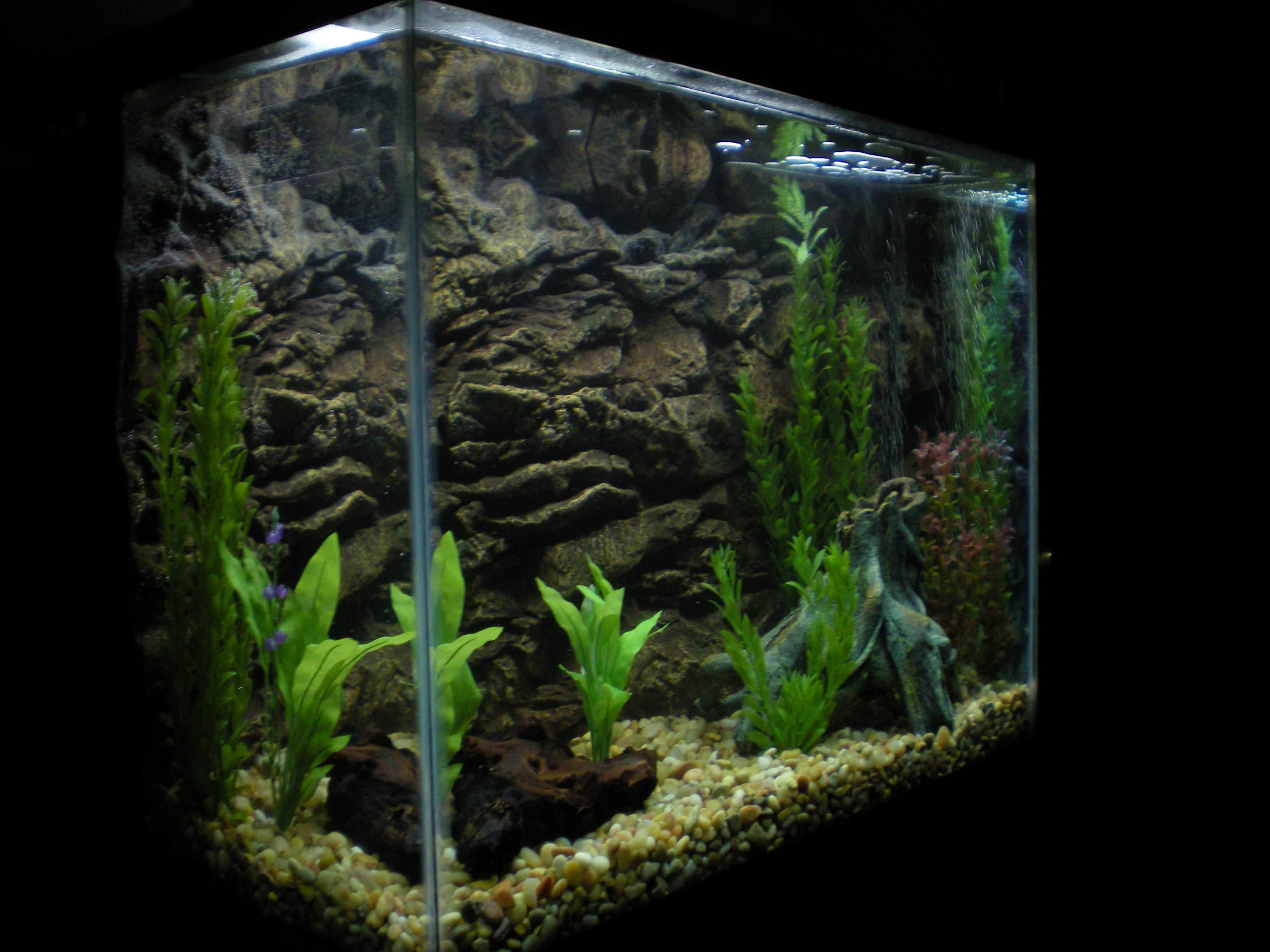 25 aquarium backgrounds wallpapers freecreatives for Small aquarium fish
