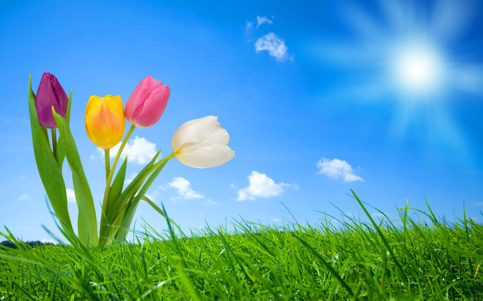 22+ Spring Nature Wallpapers, Backgrounds, Images ...