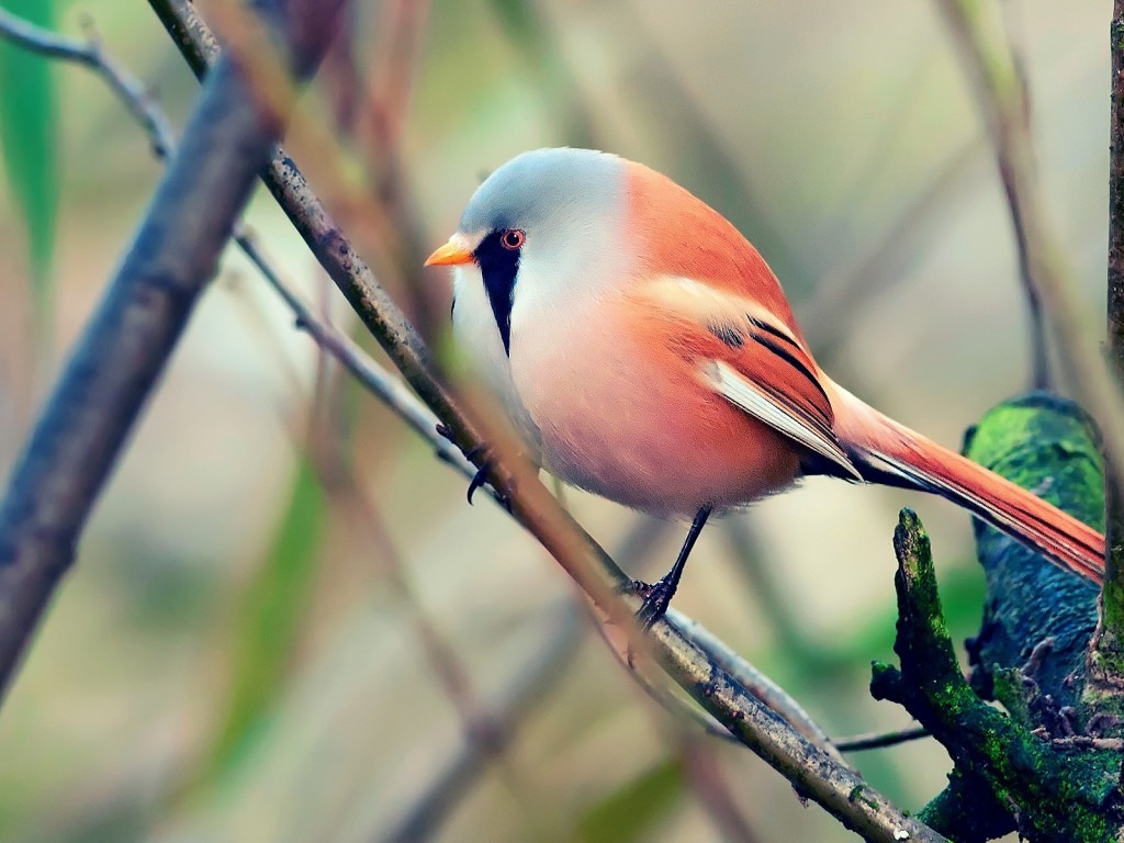 pretty little bird wallpaper - photo #3