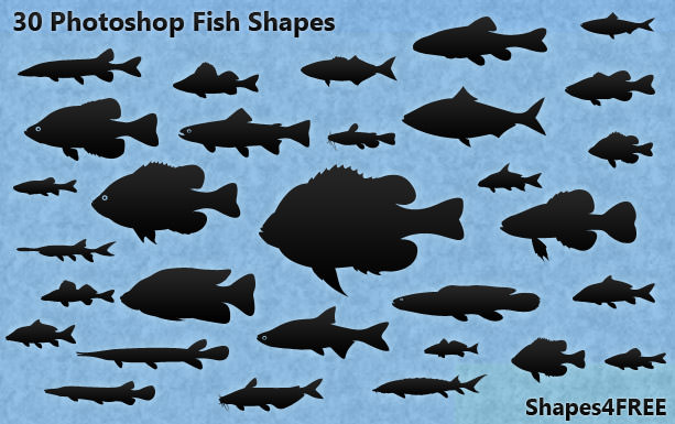 10 Free Photoshop Fish Shapes - Brusheezy