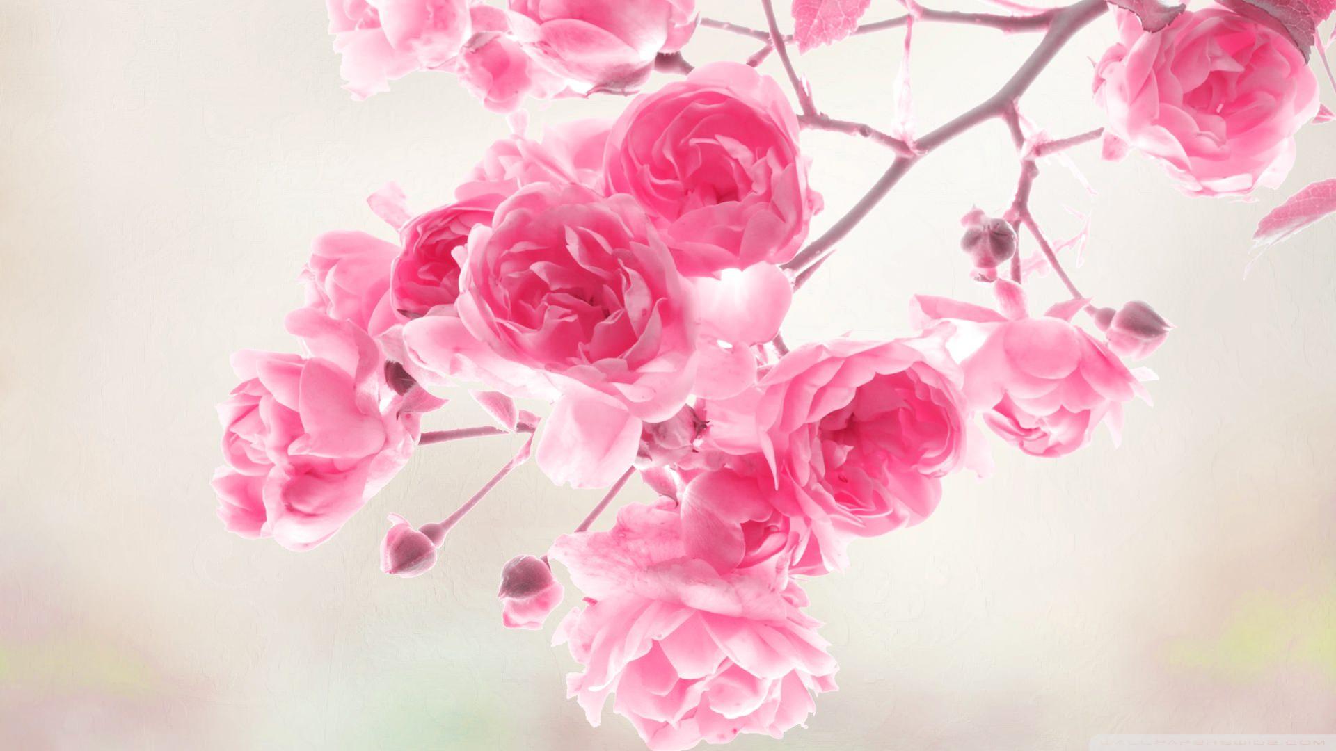 Pink Rose Vintage Wallpaper
