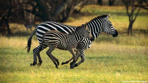 Free 25 Animal Photography Ideas