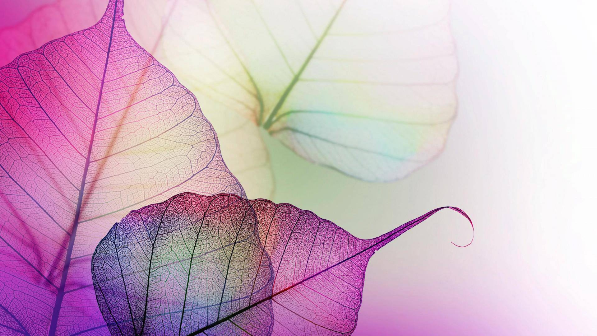 Pink Leaves Photography Desktop Wallpaper