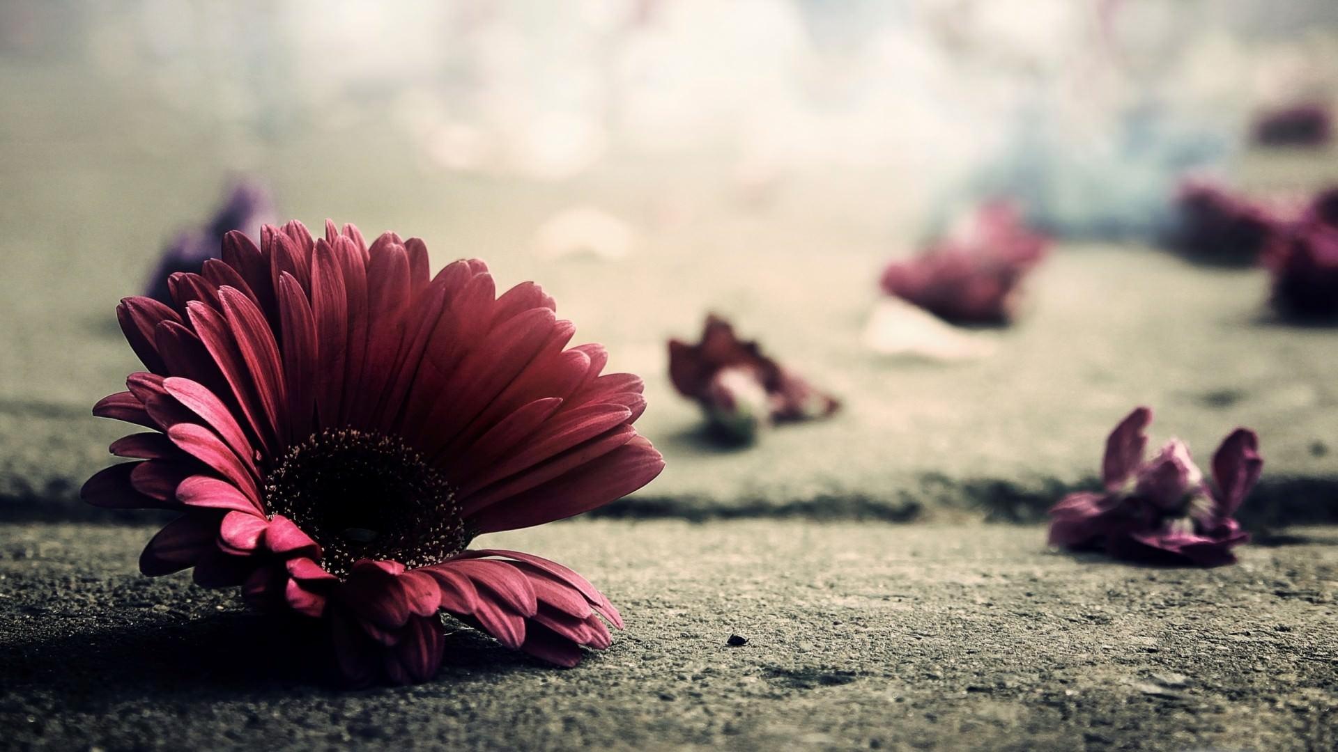 flower-vintage-petals-floral-desktop