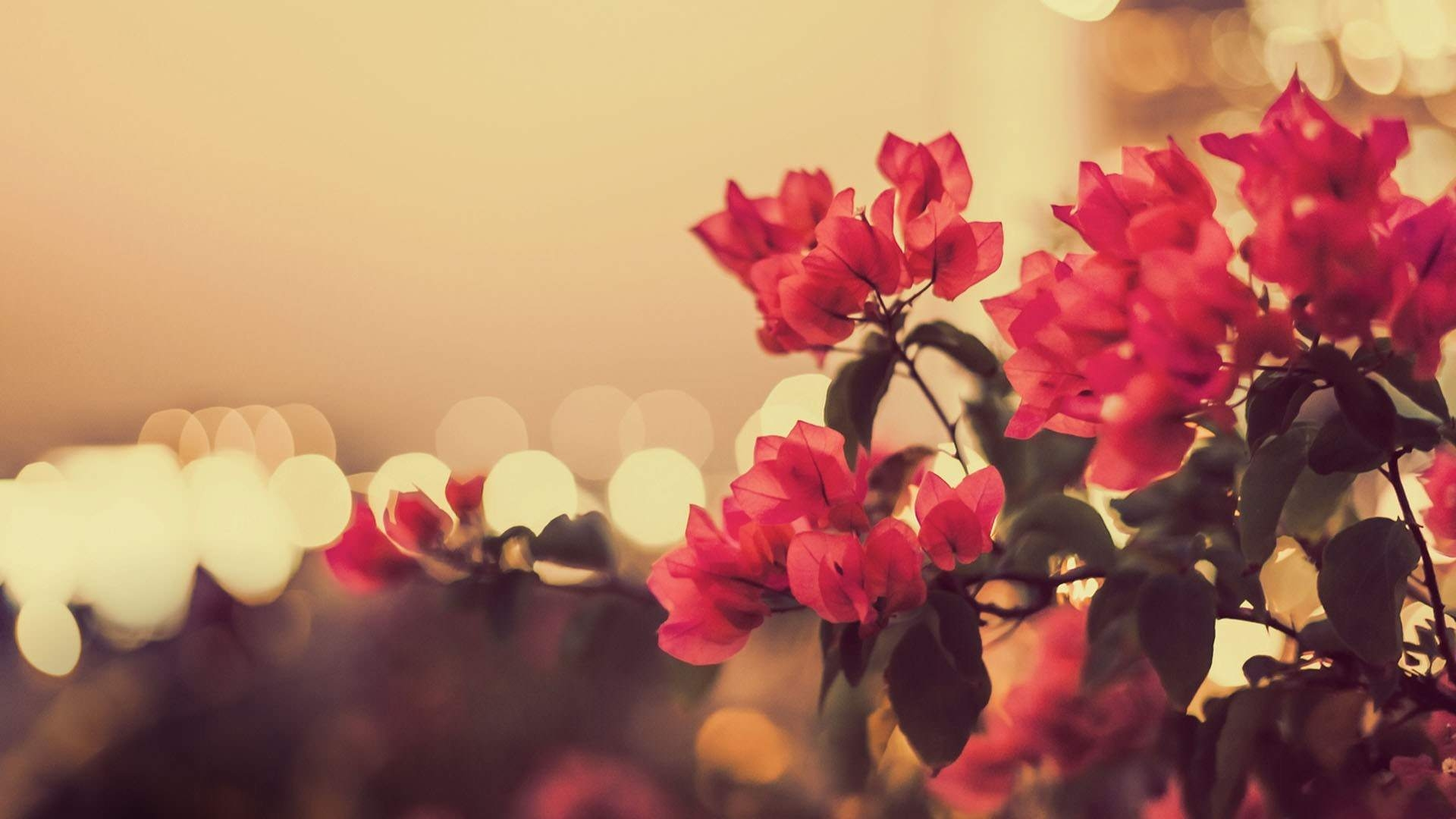 photography-flowers-bokeh-lights-photo-vintage-hd-wallpaper
