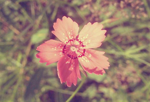 nature vintage flower