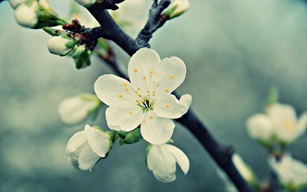 white vintage flower