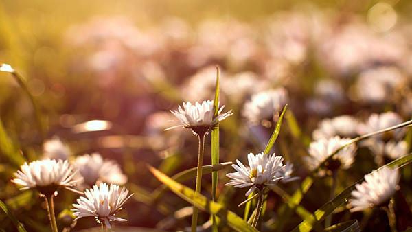 white vintage flowers