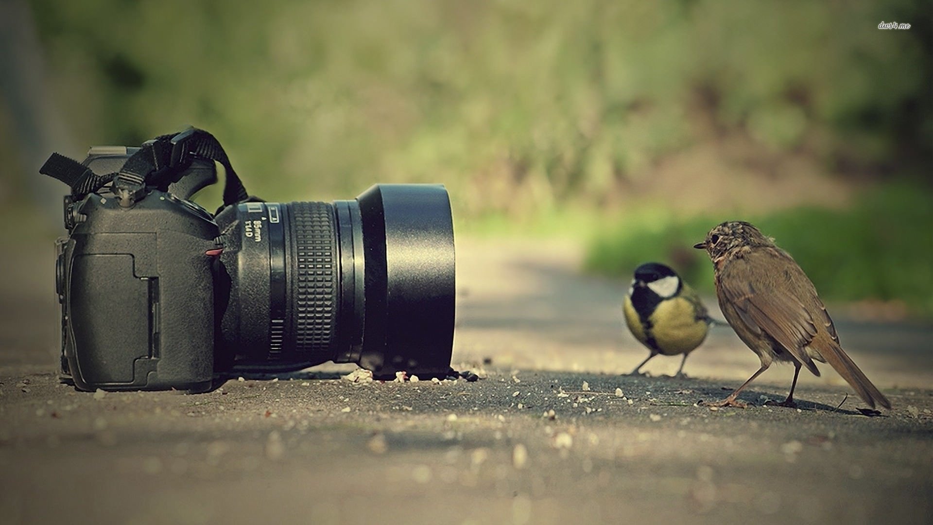 bird-photography-wallpaper
