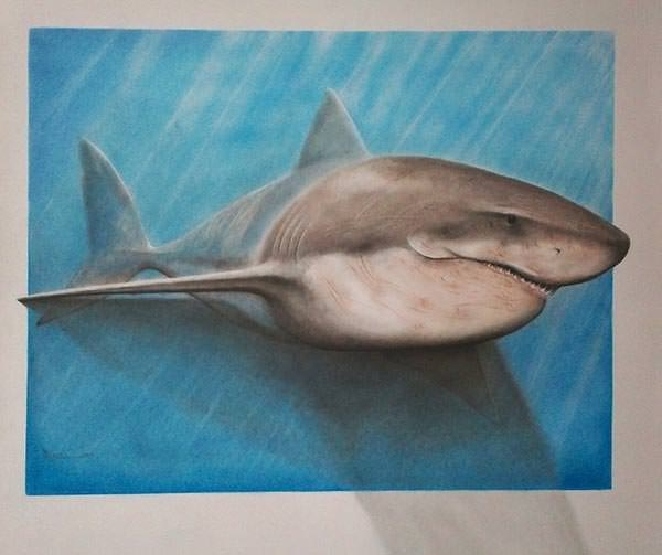 Shark-Pencil-Drawing-hard