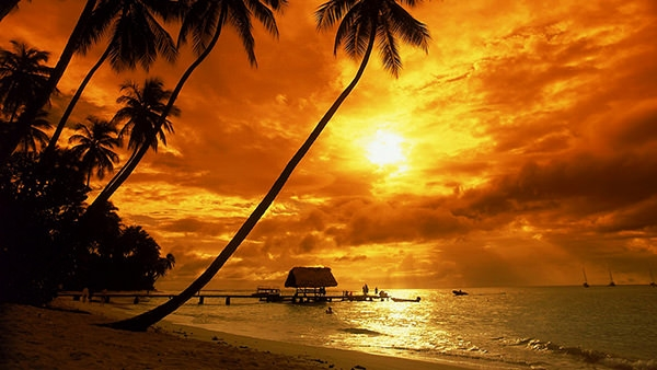 tropical-sunset-wallpaper-