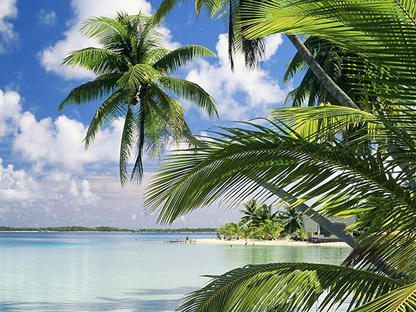widescreenbeach-palm-tree-wallpaper