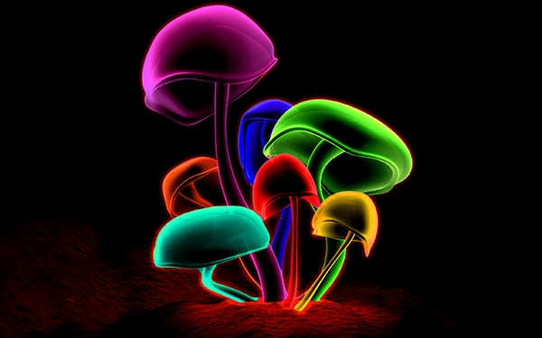 Colorful_Mushrooms(www.TheWallpapers.org)(2560x1600)