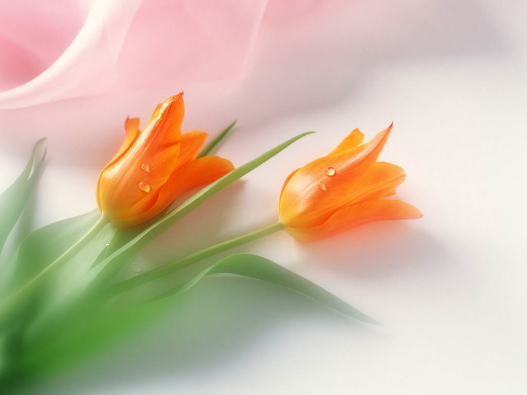 beautiful-flower-hd-images-