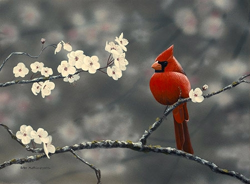 cardinal-and-blossoms-bird-painting