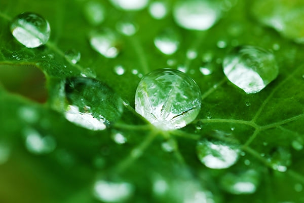dew_on_a_leaf