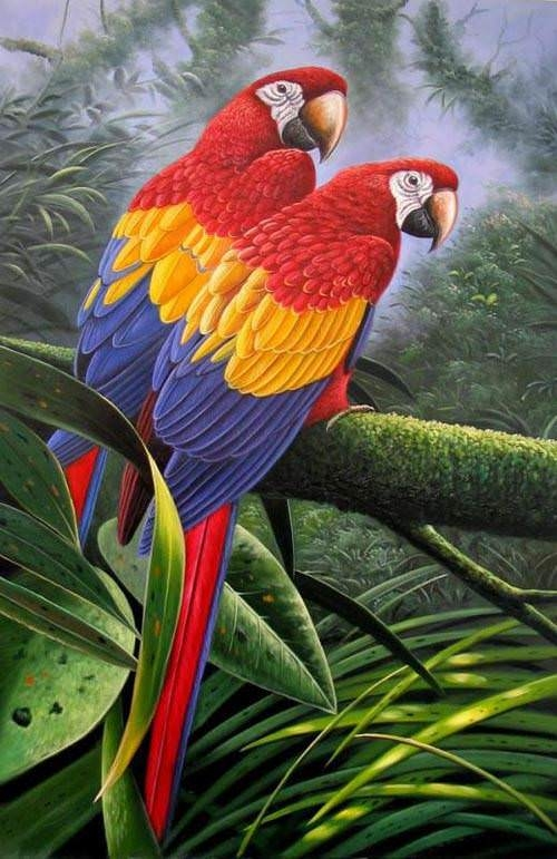 lovely parrots painting