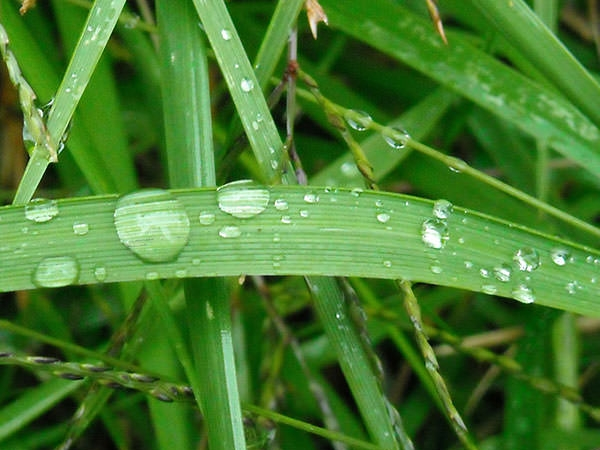 rain_drops_on_grass