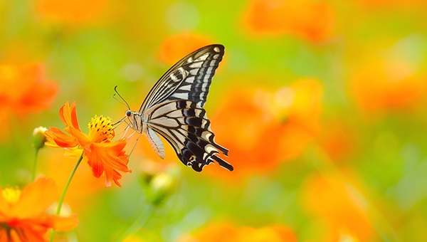 Best-HD-Butterfly-Background