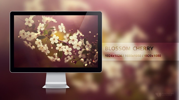 blossom cherry widescreen wallpaper