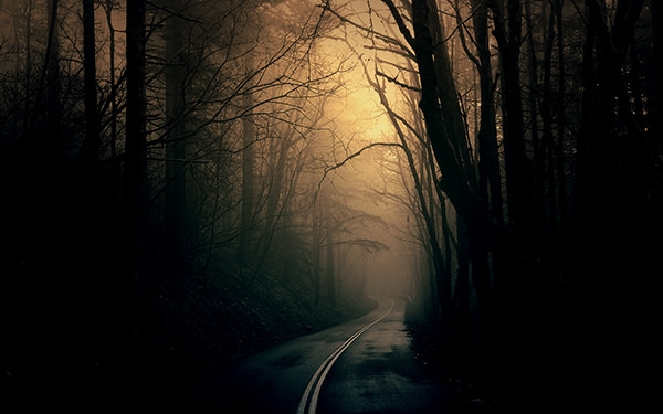 dark forest road background