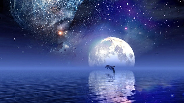 HD-star-dolphins-wallpaper-for-desktop