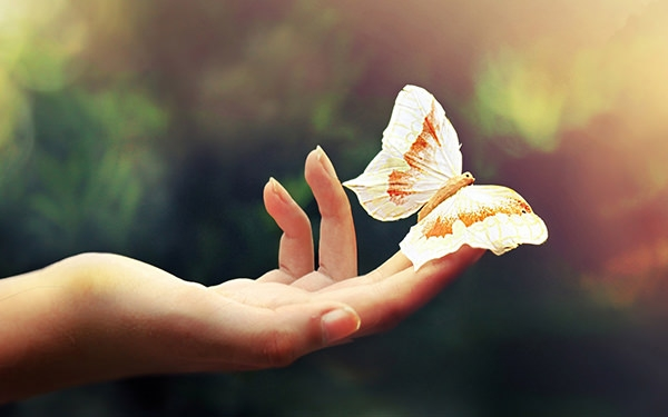 Realistic-butterfly-background