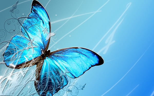 Widescreen-Butterfly-HD-Wallpapers