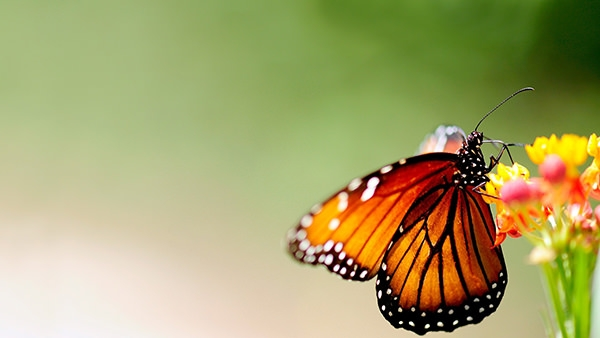 Wonderful-butterfly-background