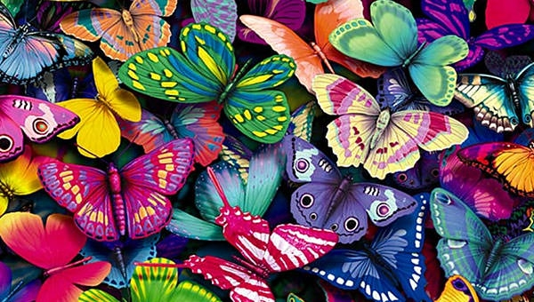 colourful-butterflies-hd-wallpaperjpg