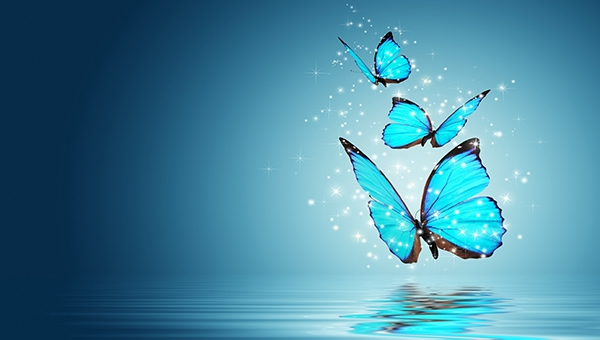 desktop-butterfly-wallpaper