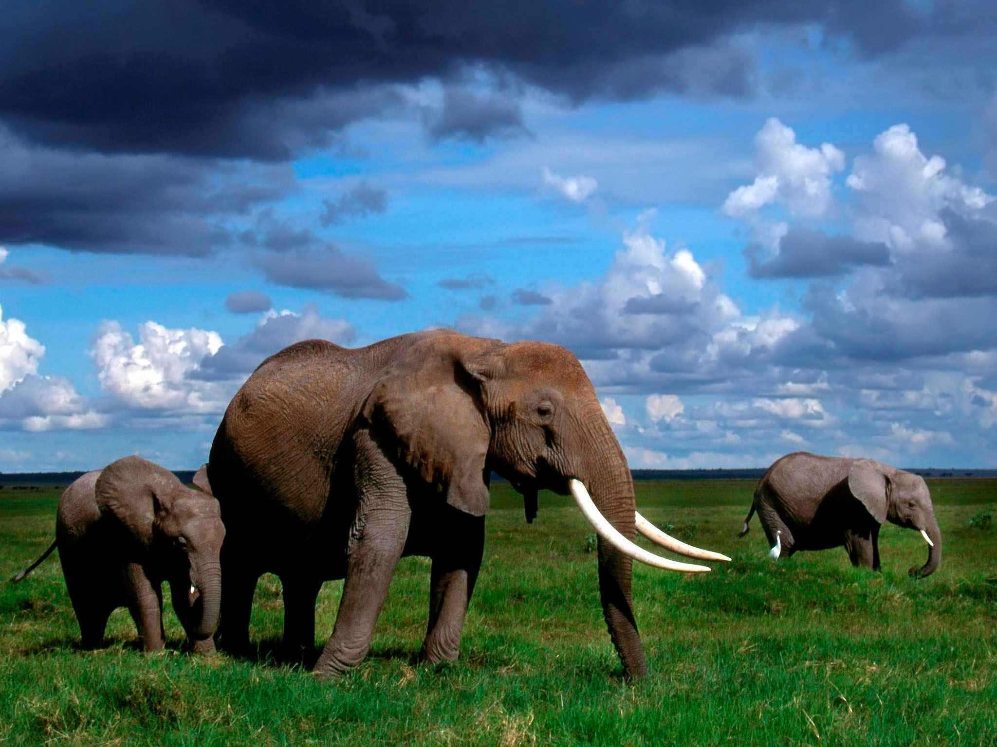 10 Best Hd Elephant Wallpapers Freecreatives