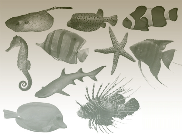 fish_brushes_for-photoshop