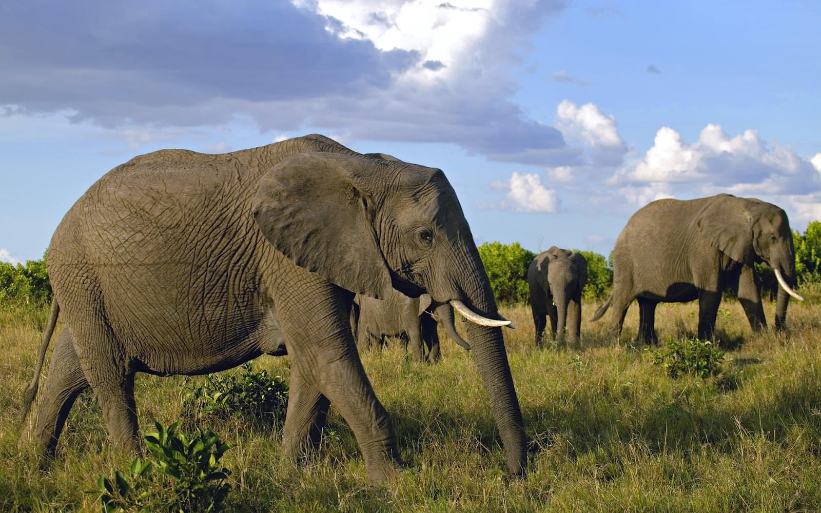 hd-african-elephants-wallpapers-with-a-group-of-elephants