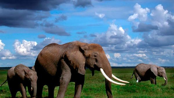 10+ Best HD Elephant Wallpapers |FreeCreatives