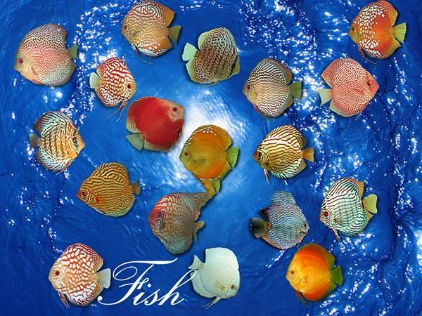 photorealistic-fish-brushes