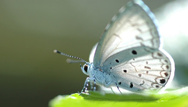 white-butterfly-HD-Background