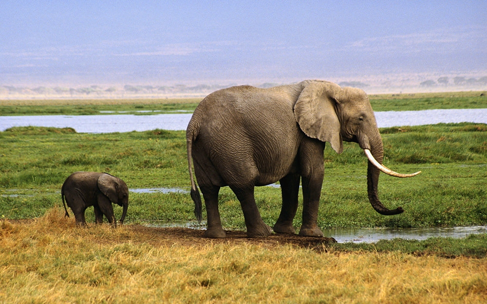 widescreen-elephant-wallpaper