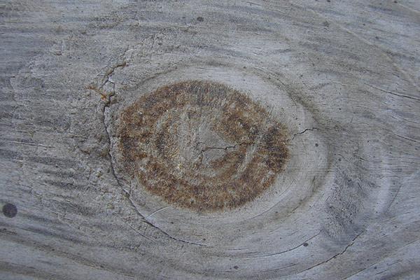 wood_grain_texture_