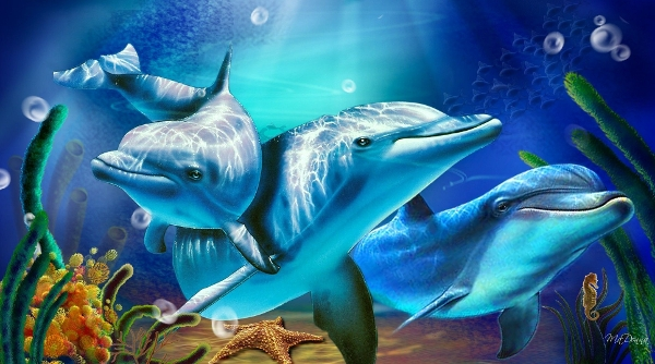 Beautifully Animated Dolphin Desktop Wallpaper