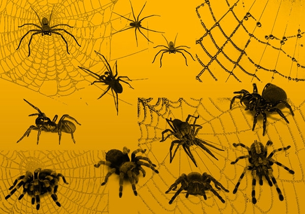Creepy Halloween Spider Brushes