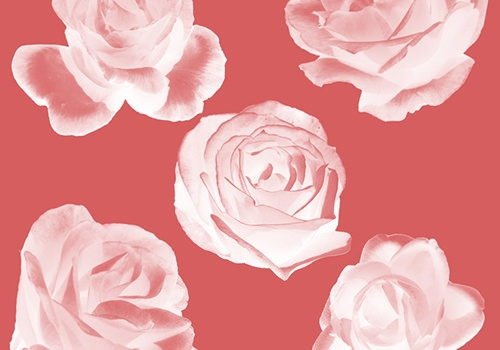 custom-rose-photoshop-brushes