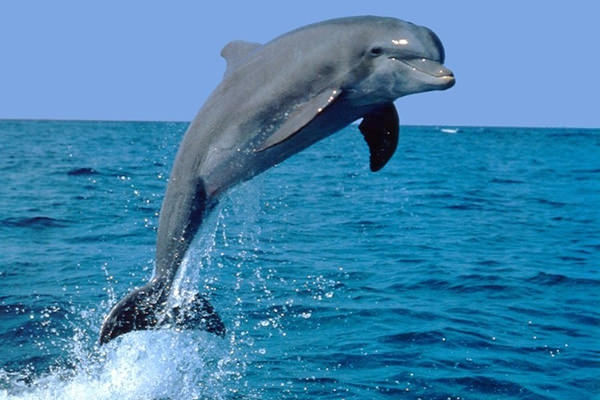 20 Best Dolphin Desktop Wallpapers FreeCreatives
