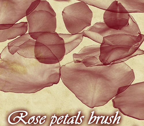 rose_petals_brush