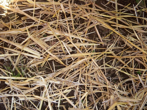 Dry Grass and Hay Texture